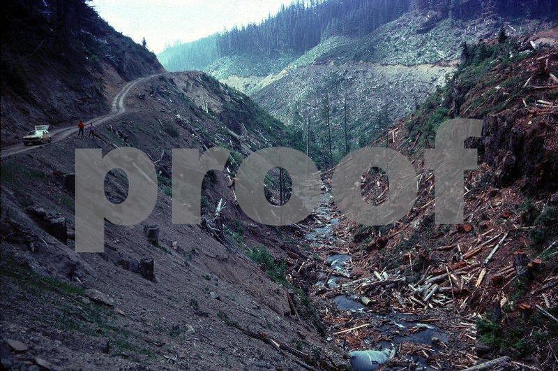 Series #1: Recent clearcutting on Langdon Creek taken on July 9, 1975.