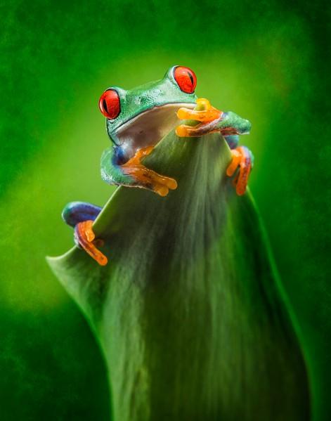 Frogscapes097_Cuchara_5402e_020614_001625_5DM3L.jpg