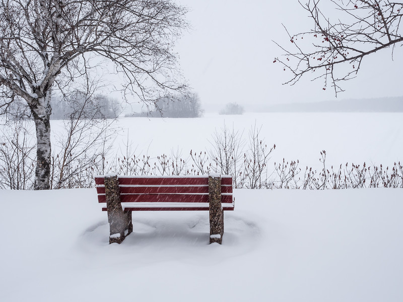 Bench On the Cornell Flowage