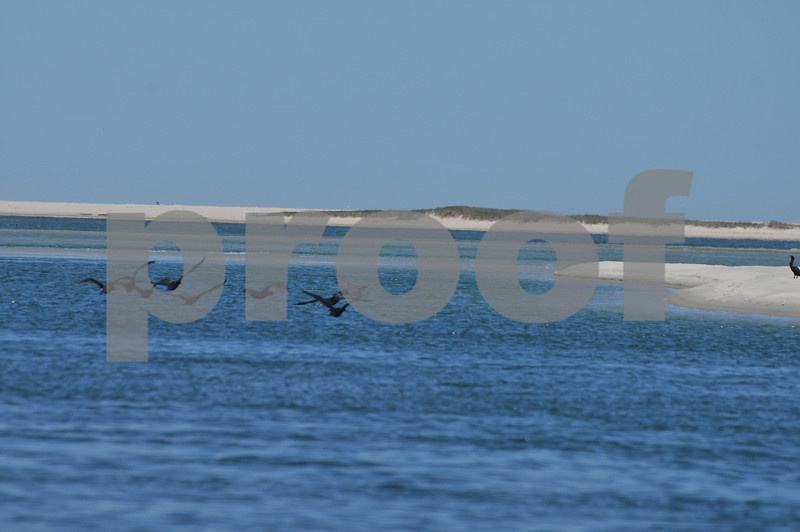 Pictues from cape and father day 122.JPG