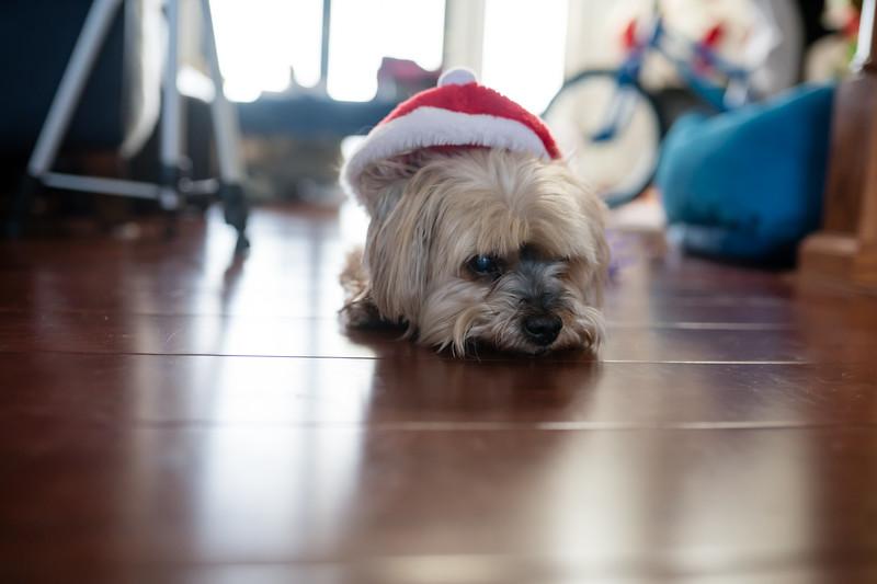 Christmas 2019-117.jpg