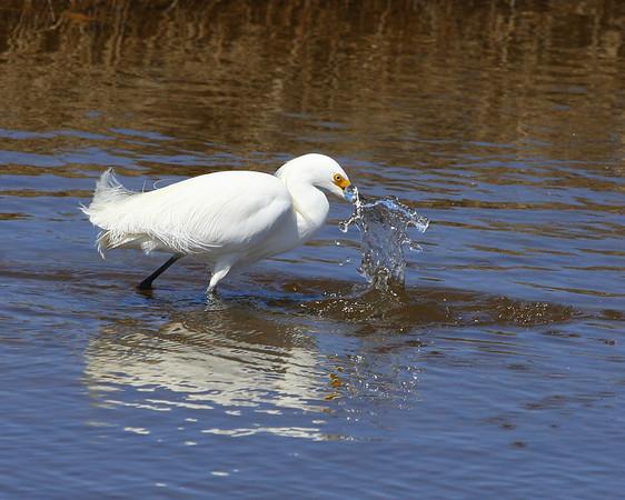 2009 - Egrets of April