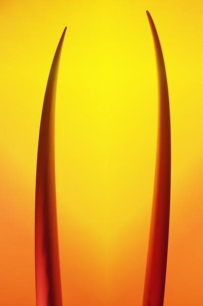 yellow57.jpg