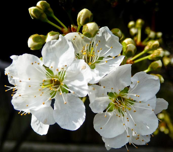 spring flowers-1000751-2.jpg