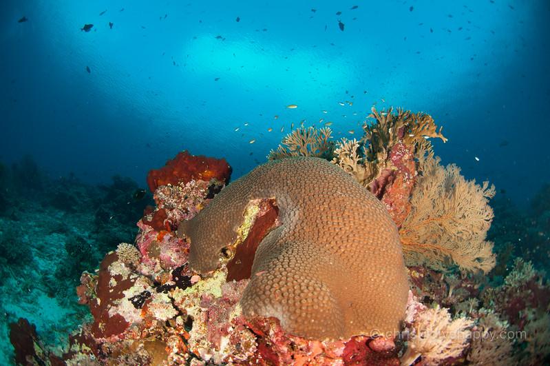 tubbataha-reef-2017-divehappy-chris-mitchell-4.jpg