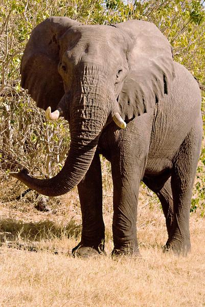 Elephant_edited-1-1.jpg