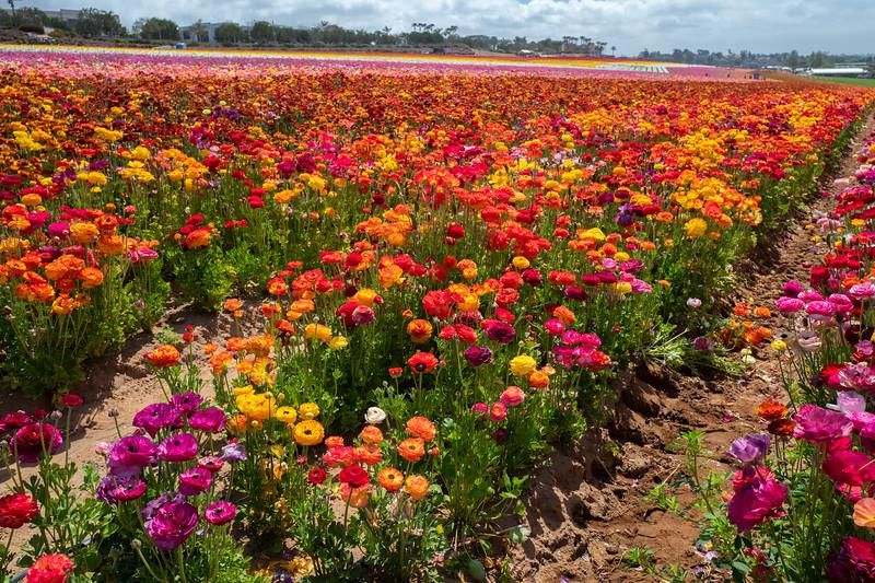 Spring Flowers A-154.jpg
