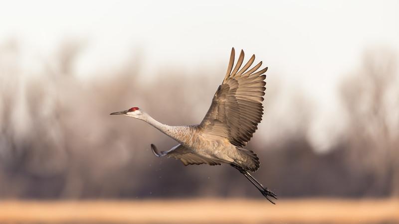Crane18-5972.jpg