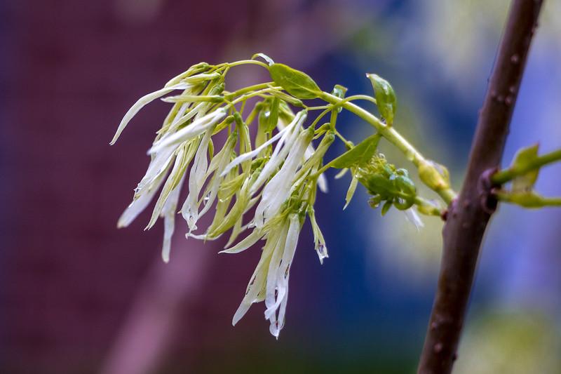160501_15_6321_Flowers-1.jpg