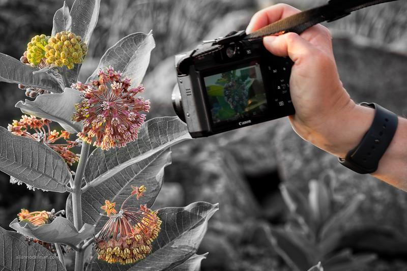 Jessie Captures a Milkweed