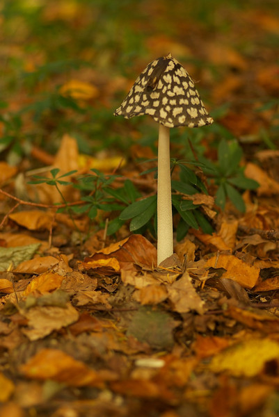 mushroom 23.jpg