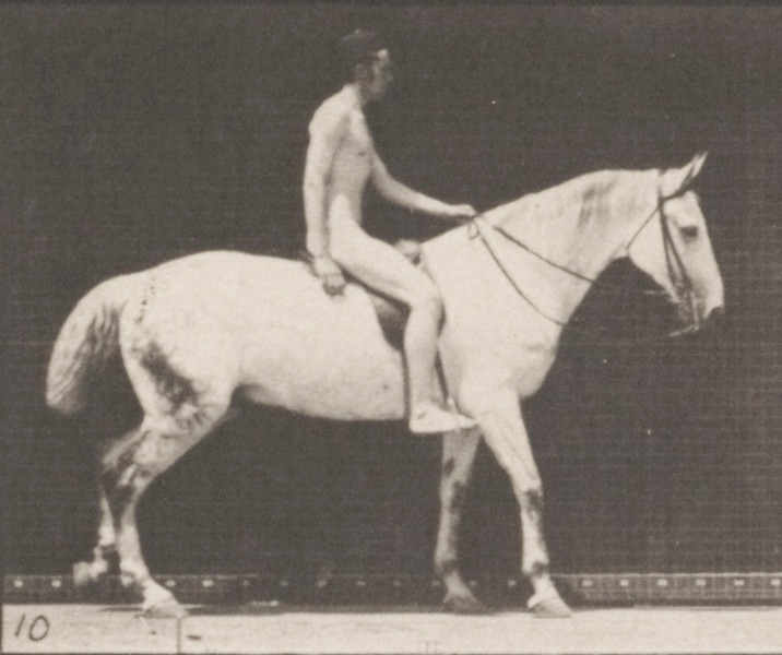 Horse Smith walking with saddle nude rider