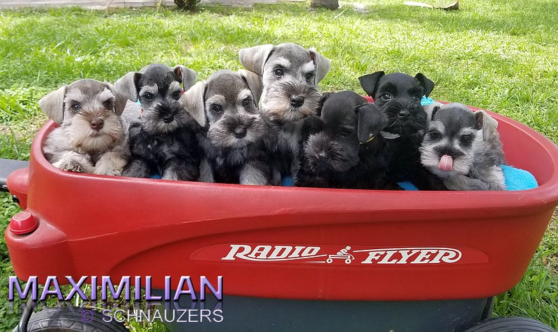 Paloma Pups 052.jpg
