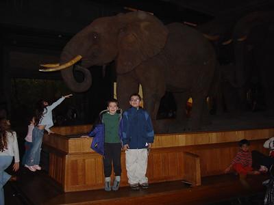 AMNH 2003.11.28