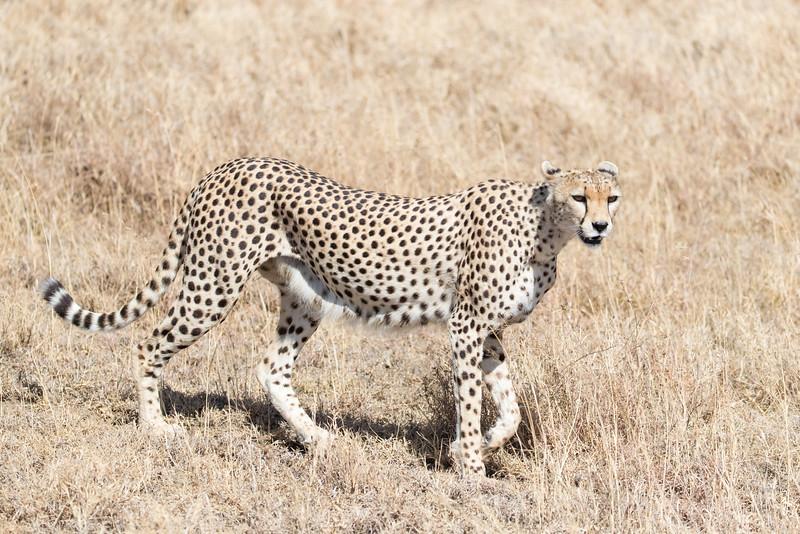 Africa - 101516 - 4780.jpg