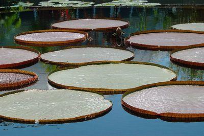 Aquatic Gardens - 2005