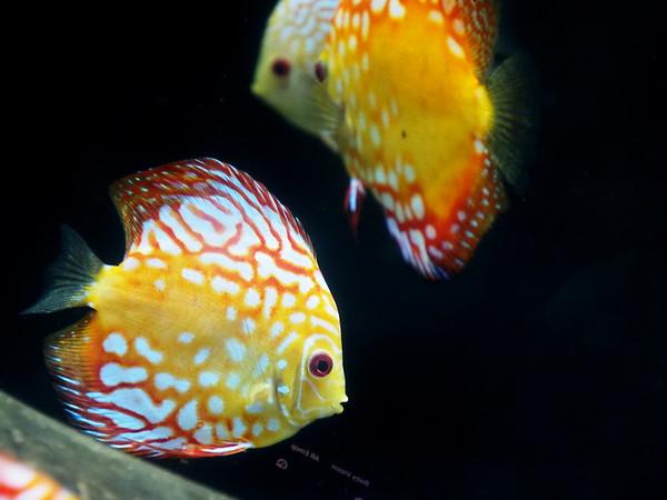 GA, Atlanta - Georgia Aquarium, 2019