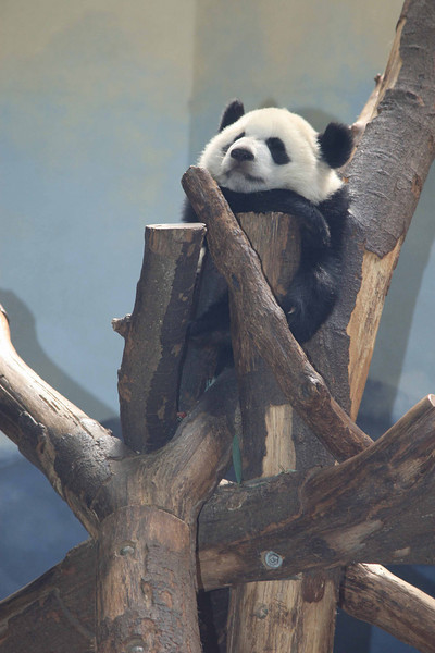 One of Zoo Atlanta's newest residents