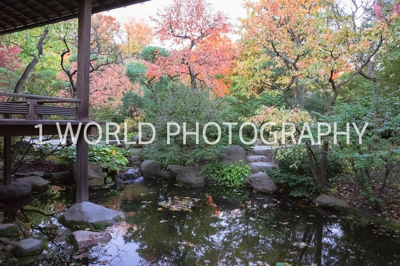 Anderson Japanese Gardens Fall '16-5.jpg
