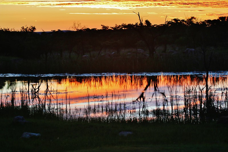 Africa sunset on game farm