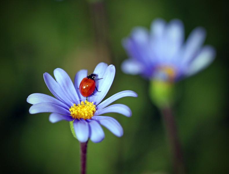 Lady Bug Wild 3.jpg