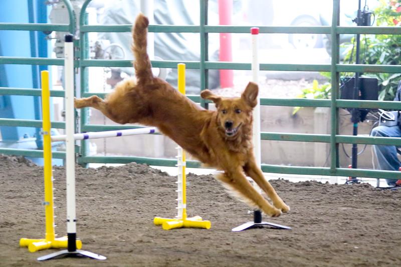3-15-2015 Bloodhound-9831.jpg