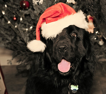 Odin Christmas Cards