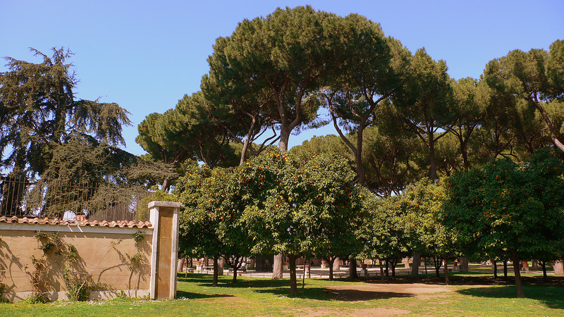 Orange trees and Italian Stone Pines line in the park next to the Santa Sabina.