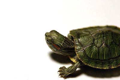 04-06-2003 - Turtles