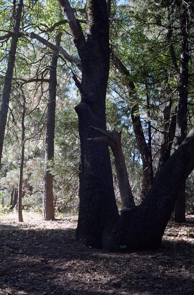 Lake Cuyamaca, 1996