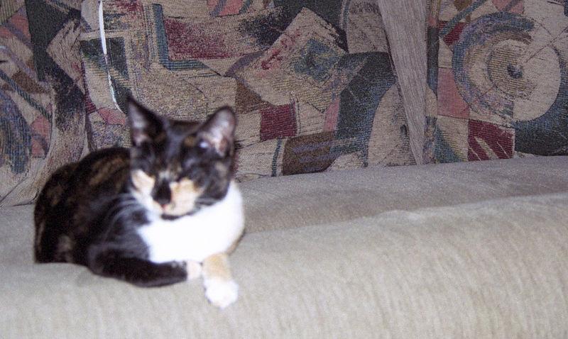 2003 12 - Cats 54.jpg