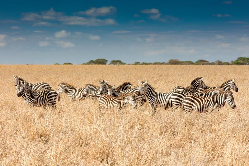 Africa - 102116 - 8112.jpg