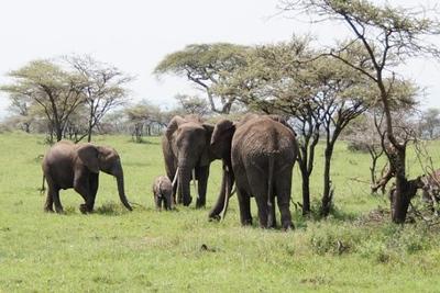 1494239977African-Safari-62.jpg