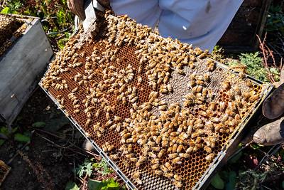 190312-beehives