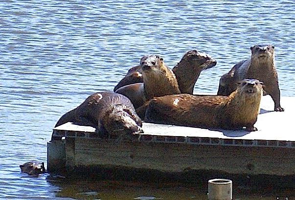 . Catching some rays. (Courtesy of Krist Jensen)