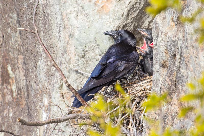Ravens Nest-8331.jpg