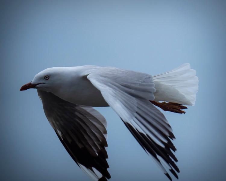 20190227 birds _2.JPG
