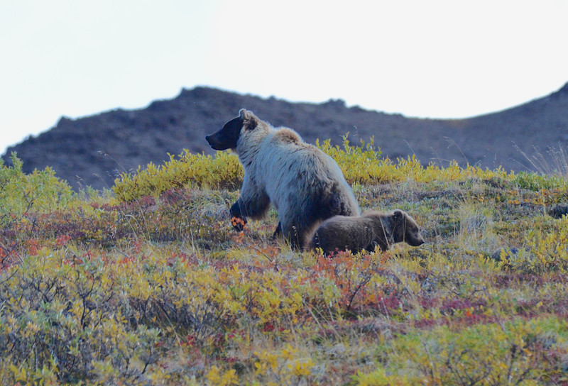 Alaska Fall 2013 - 156.jpg