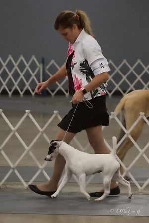 Everglades Terrier Show 2021 Saturday
