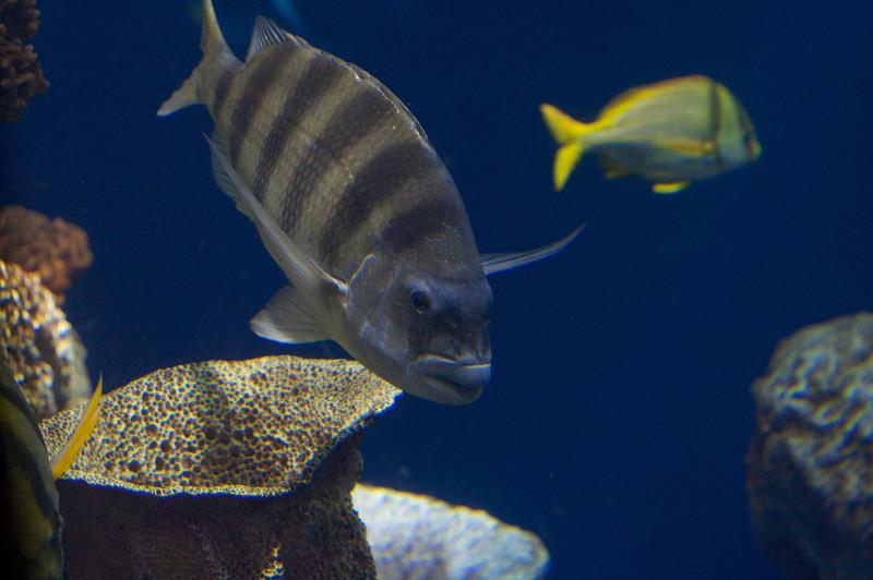 Fish at the SC Aquarium