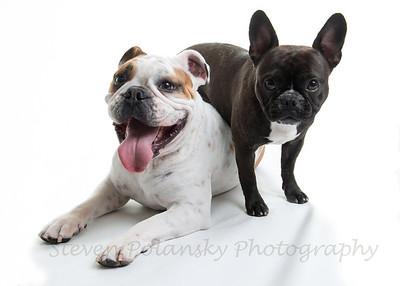 Coco & Wilbur