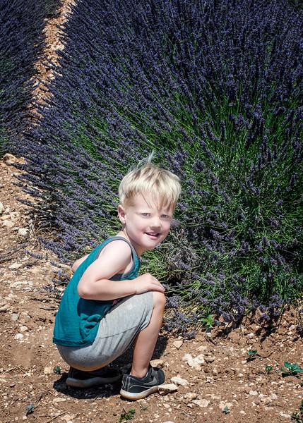 Jaxson in the lavender