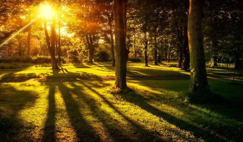 Forest Shadows-158.jpg