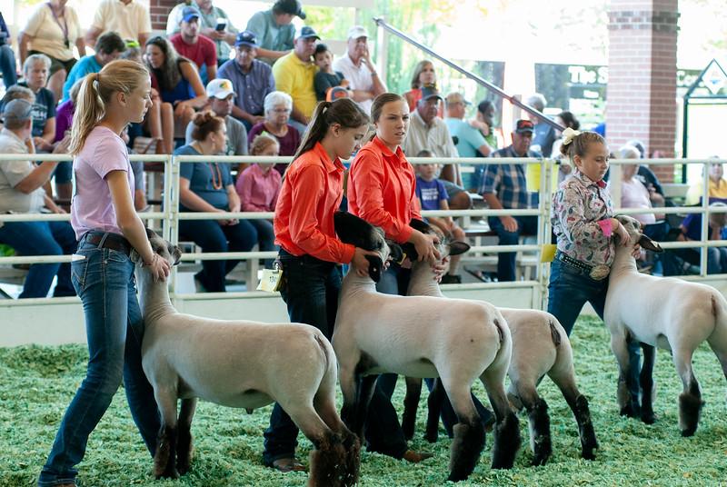 ks_state_fair_2019_lambs-16.jpg