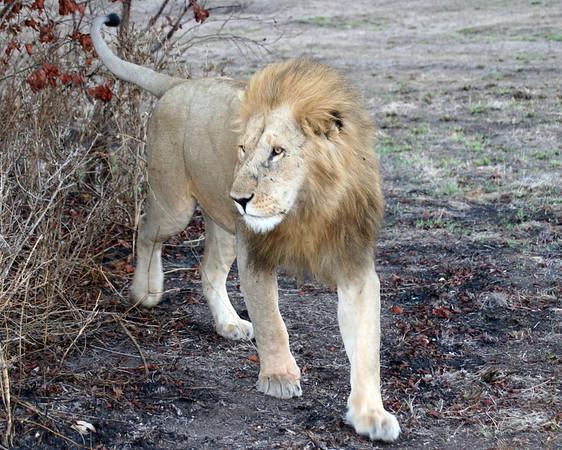 Africa 2007 Folder