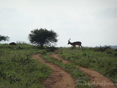 on Safari at Kapama, April 2018