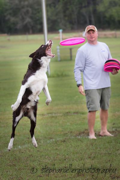 _MG_2272Up_dog_International_2016_StephaniellenPhotography.jpg