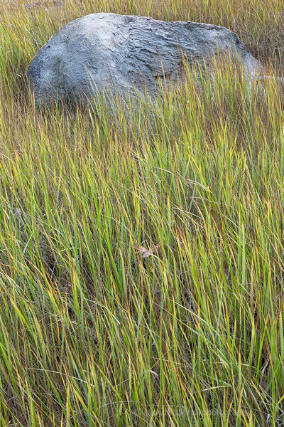 Boulder and Grass, Acadia.jpg