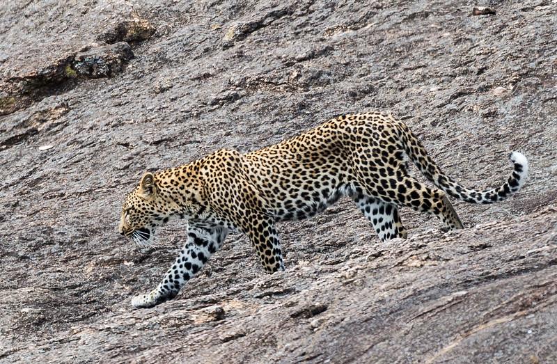 Kenya046.jpg