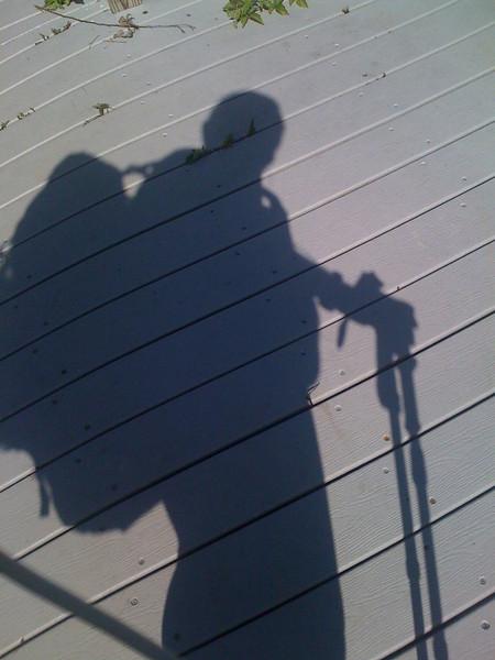 Boardwalk shadow of Mudsy